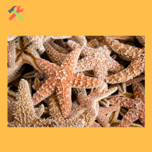 Starfish Story Project